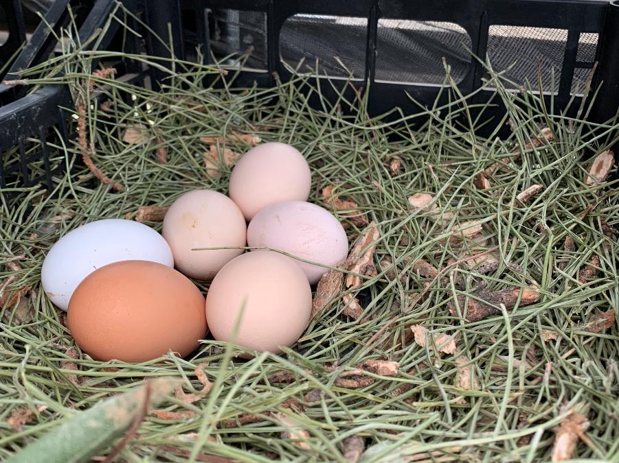 Il mistero delle uova scomparse