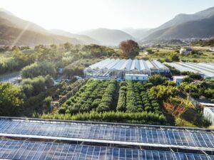 azienda agricola aeroponica in serra Liguria